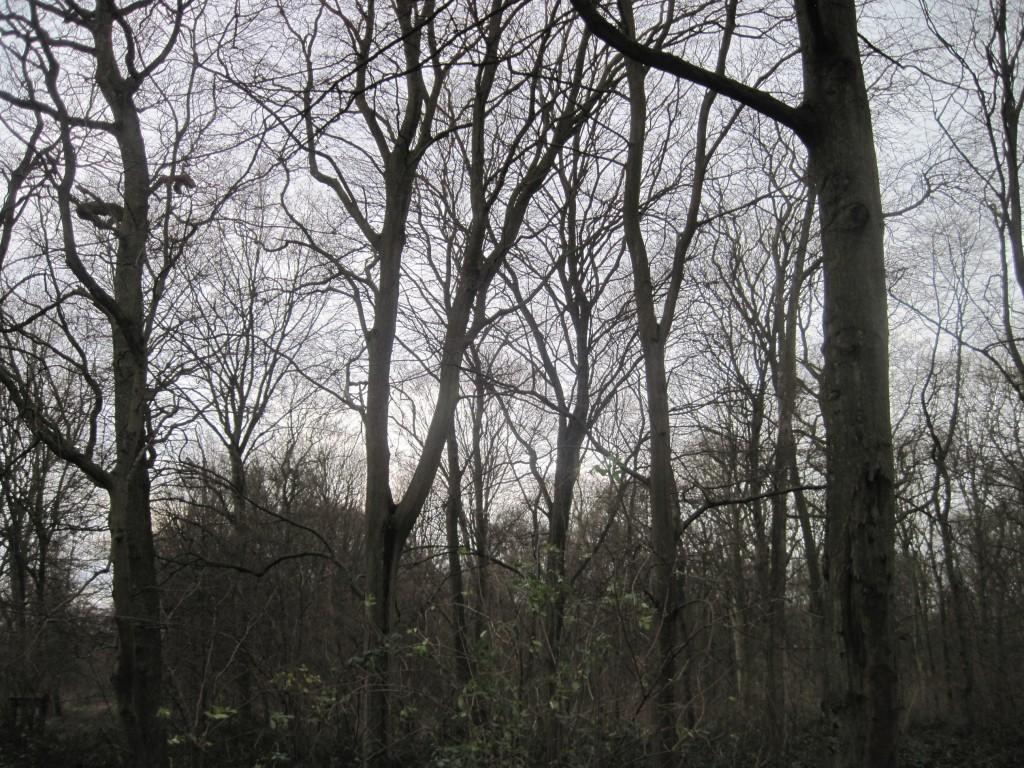 forêt Phalempin