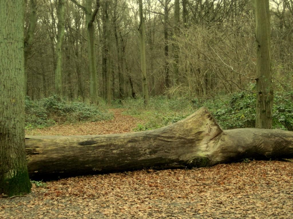 forêt domaniale arbres