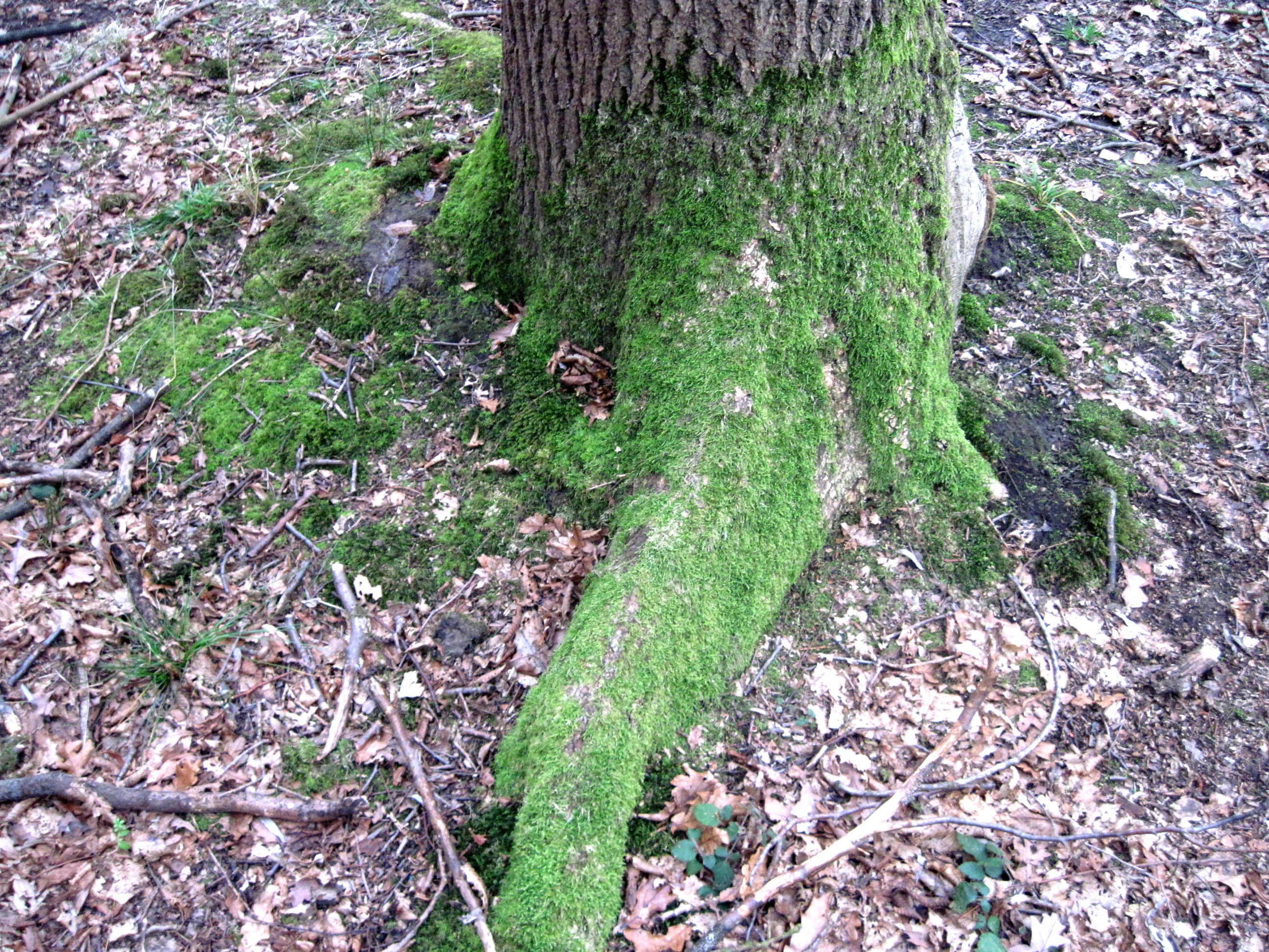 forêt domaniale de phalempin | La maternelle et le CP à la ...