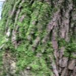 tronc d'arbre forêt